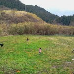 dogrun_photo02_big